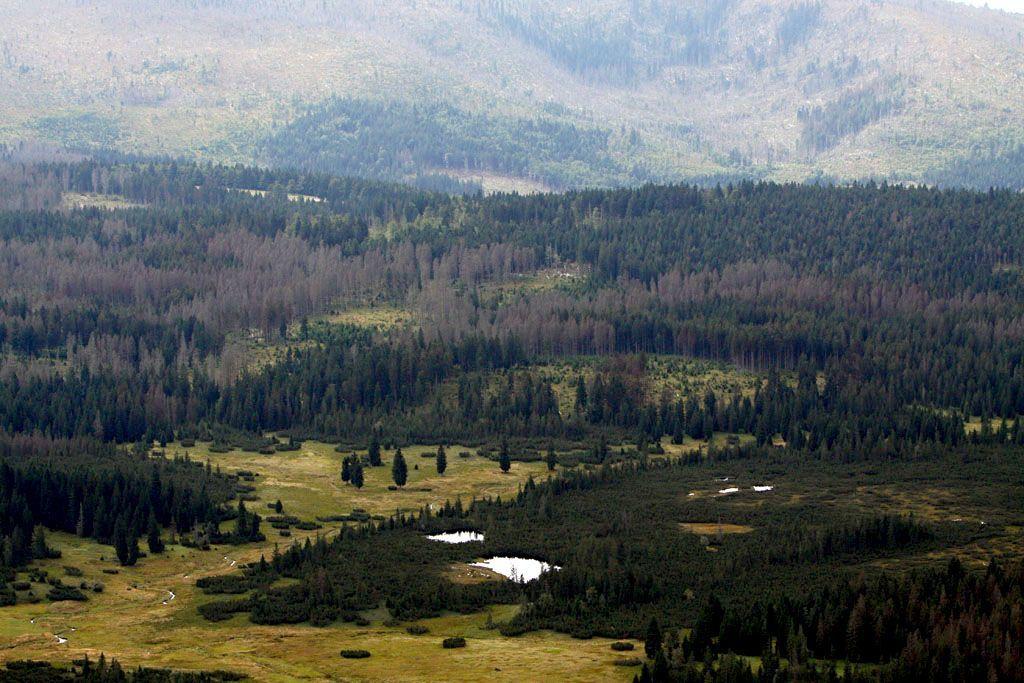 Šumavské lesy, hory a louky