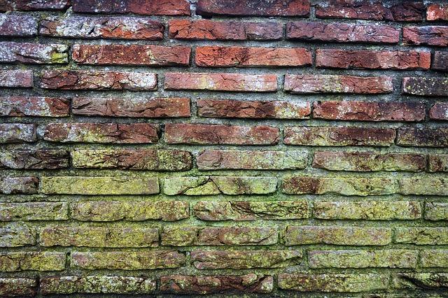 plesnivé cihlové zdi